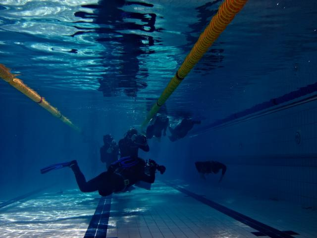 Great Northern UK International Pool Freediving Competition 2014